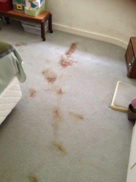 Blood stains on carpet before cleaning
